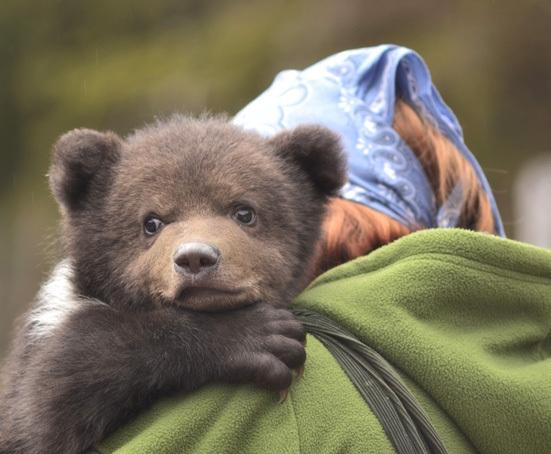 """ONG, amendat cu 10.000 lei pentru că au salvat de la moarte doi pui de urs. Ministerul Mediului: """"Au făcut-o ilegal!"""""""