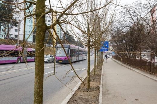 1.000 de copaci au fost plantați de la începutul anului 2021, la Cluj-Napoca