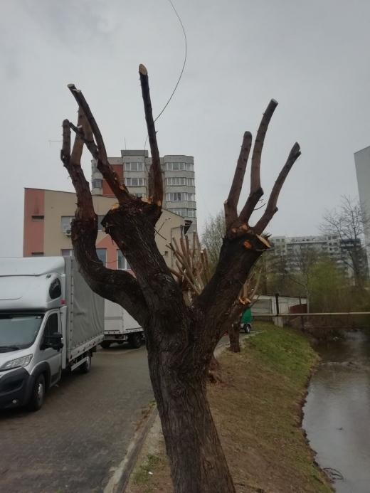 """Pomi """"mutilați"""" în Parcul Babeș."""