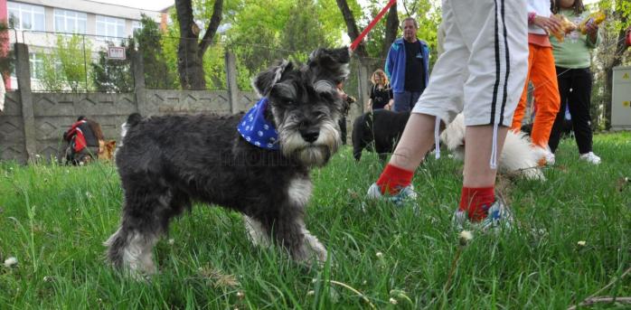 Campanie de sterilizare gratuită a câinilor cu stăpân din Florești. Ce trebuie să faci pentru a te înscrie?