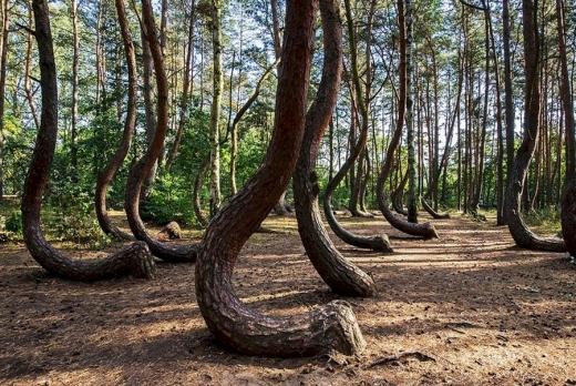 Pădurea Hoia Baciu: adevăr sau basme? Curiozități despre pădurea Horea Baciu