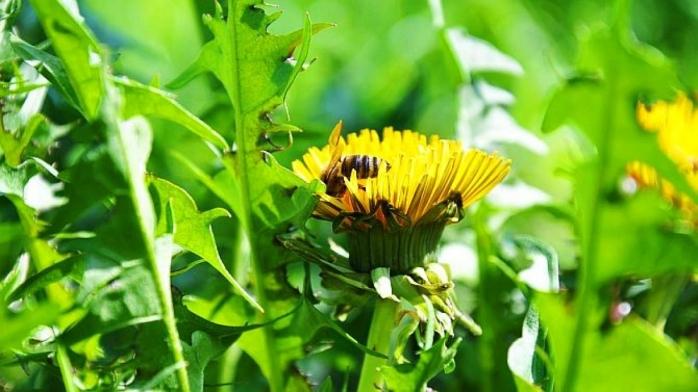 Cele mai subestimate plante! Toți le vedem, dar nu le consumăm NICIODATĂ