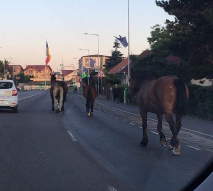 """Primăria Florești vrea să """"ridice"""" caii, lăsați nesupravegheați pe drumuri. Pivariu: """"Se plimbă nestingheriți"""""""