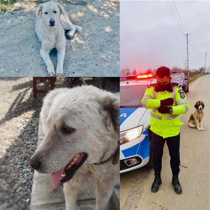 Un polițișt cu suflet mare a salvat viața unui câine, grav rănit și părăsit, când patrula la Electric Castle