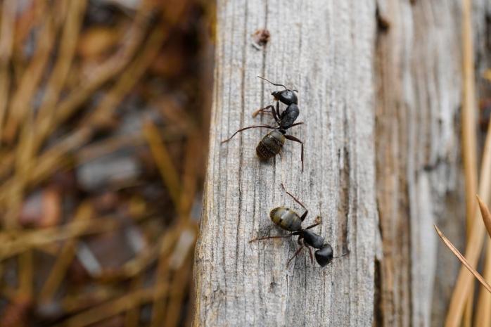 Cum îți protejezi casa de insecte și gândaci? Află tot ce trebuie să știi