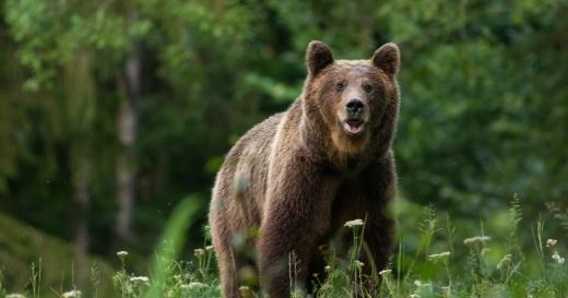 Unul dintre cei mai cunoscuți vânători din Transilvania