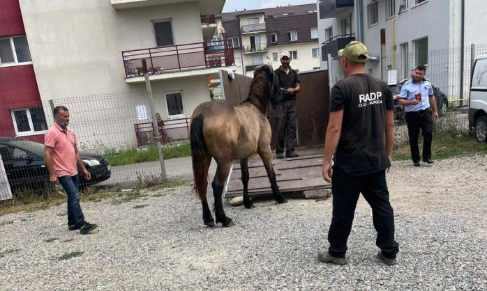 """Primăria Florești a """"ridicat"""" primii cai din comună. Pivariu: """"Suntem o comunitate cu profil urban"""". FOTO"""