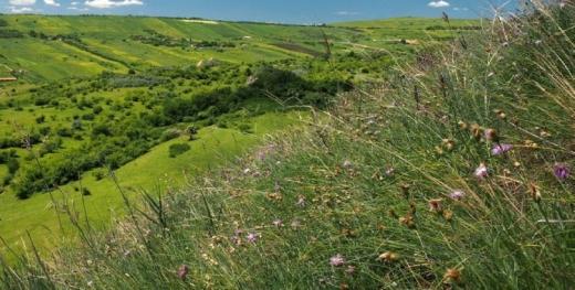Rezervație naturală la doi pași de orașul Cluj-Napoca