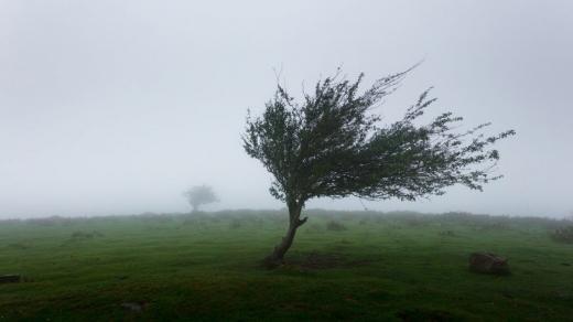 COD GALBEN de vânt puternic în Cluj. Rafale de vânt de 80 km/h la munte