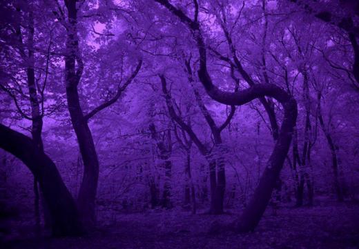 """Jurnalistă britanică, după o plimbare noaptea în Pădurea Hoia: """"Locul cu adevărat înspăimântător al Transilvaniei"""""""