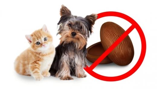 Alimentul toxic pentru animalul tău de companie. Poate duce la DECES