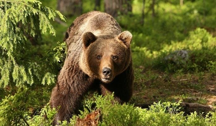 ATENȚIE! Un urs terorizează clujenii din comuna Bobâlna. Animalul a fost zărit de un localnic