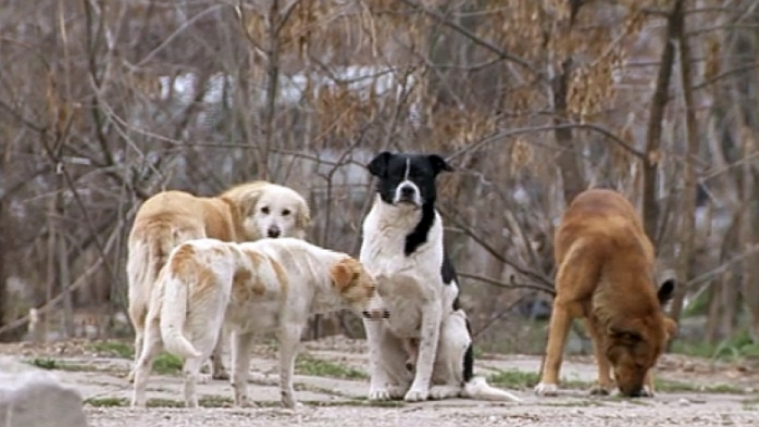Primăria Chinteni dorește să-i scape pe locuitori de câinii maidanezi